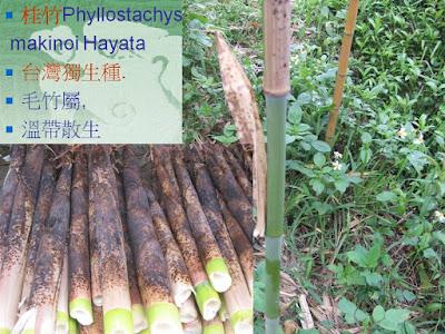 臺灣僅存的專業竹簾工廠