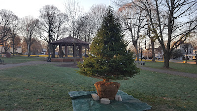 Christmas tree on the Franklin Town Common