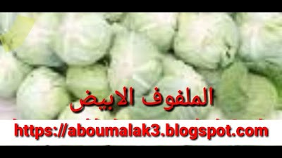 الملفوف الابيض علاج فعال لسرطان القولون والثدي