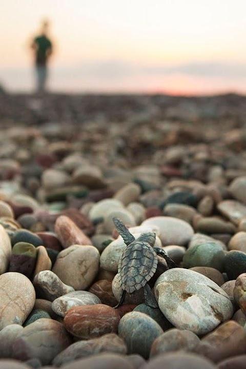 Rùa con trên bãi đá