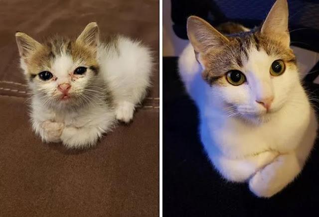 Как изменились кошки после того, как их взяли с улицы домой