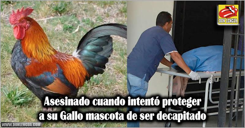 Asesinado cuando intentó proteger a su Gallo mascota de ser decapitado