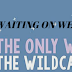 Waiting on Wednesday: WE ARE THE WILDCATS by Siobhan Vivian