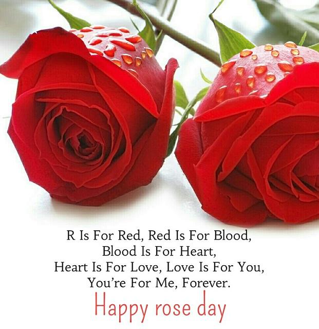 Rose Day True Whatsapp Status DP