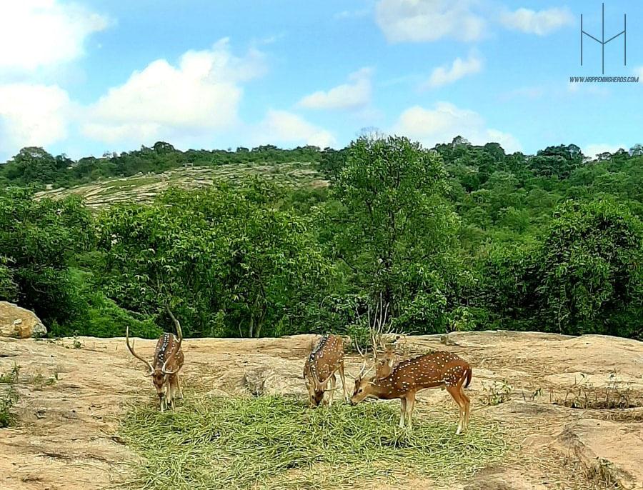 Bannerghatta National Park, Bannerghatta National Park Safari, Bannerghatta Park, Bannerghatta National Park Bangalore, Bannerghatta, National Park, Bannerghatta Biological Park, Bannerghatta Zoo, Bannerghatta National Park Malayalam, Bannerghatta National Park Bangalore Safari, National Park In Bangalore, Bannerghatta Road, Butterfly Park, Blog, Blogging, Bloggers, Travel Bloggers, Happening Heads, #HappeningHeads, #HHxKITE2019. Karnataka Tourism