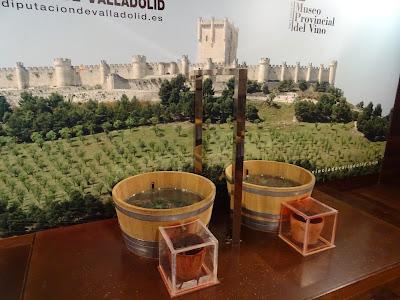 Museo Provincial del Vino