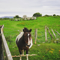 Pictures of Ireland: horse by a megalithic tomb