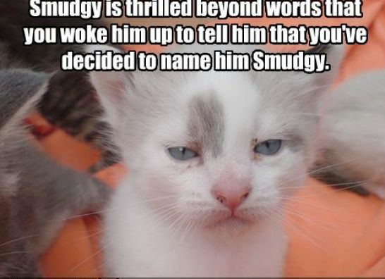 Funny biz - Funny animal pictures with words ...