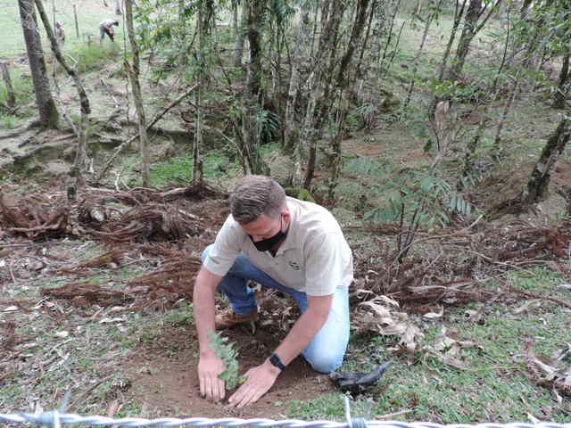 Projeto Conexão Araucária busca salvar araucárias da extinção