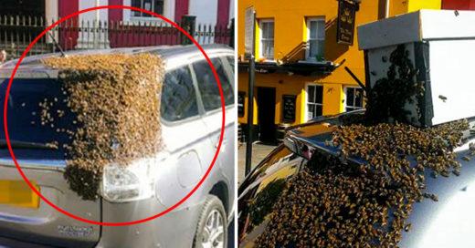 20 mil abejas se adhieren a un carro para salvar a la reina