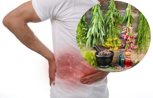 أسباب التهاب الكلى والعلاج بالأعشاب الطبيعية