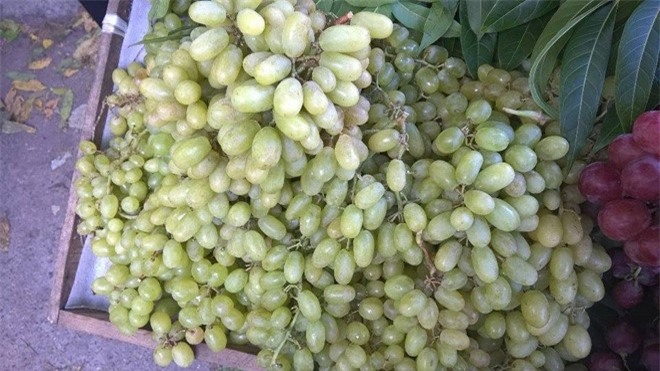 Danh sách đen rau củ trái cây Trung quốc