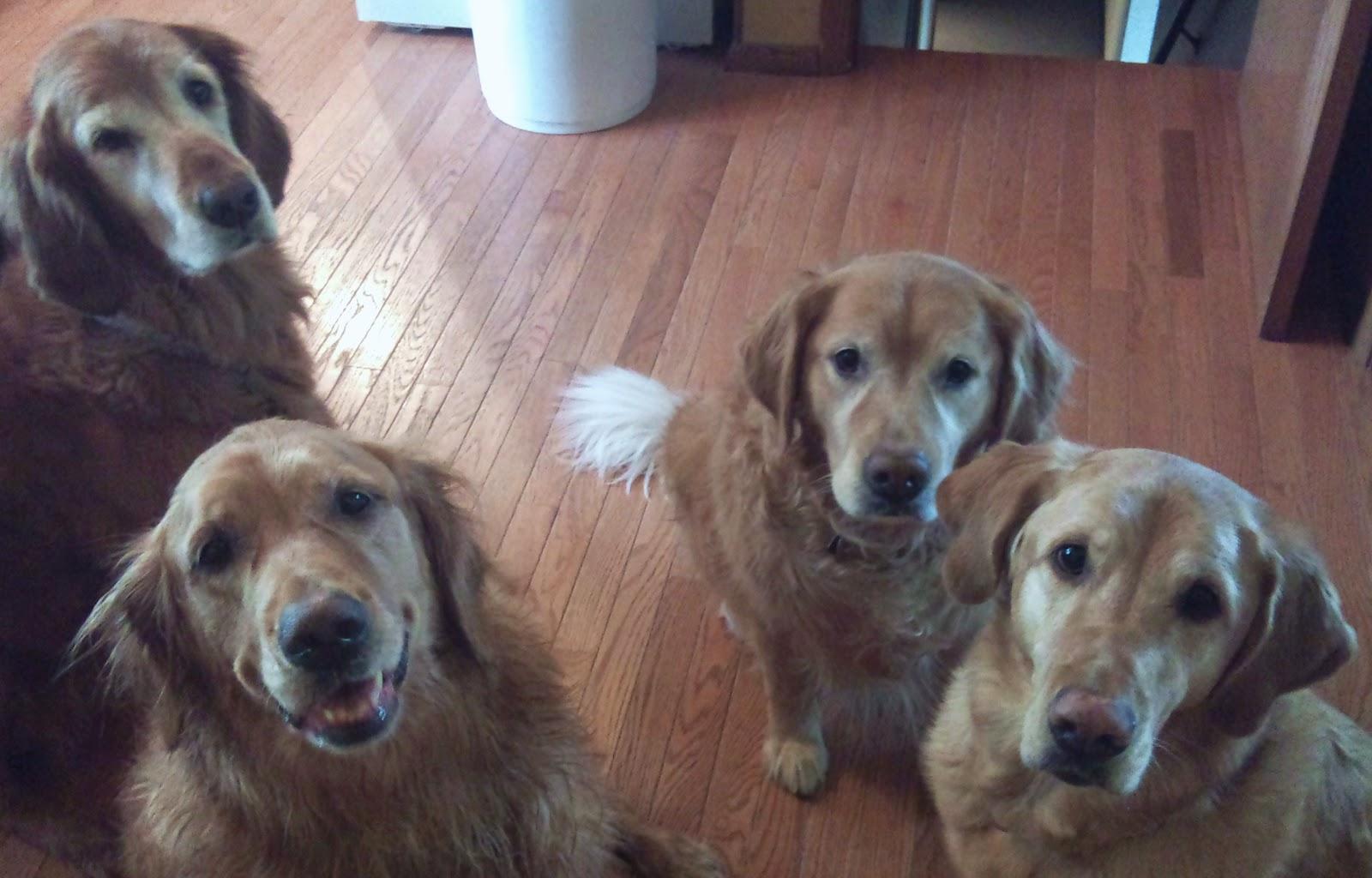 liver tumors symptoms in dogs