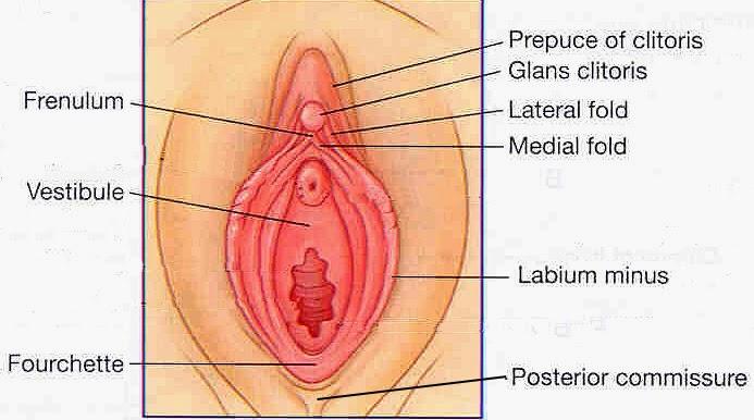 Prostate miliking cumshot