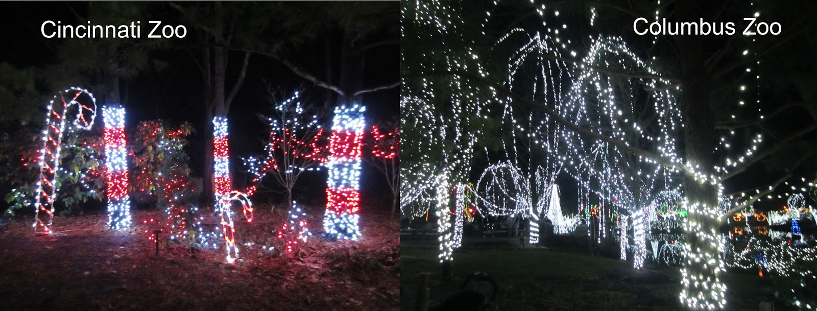 Zoo Lights Columbus Ohio