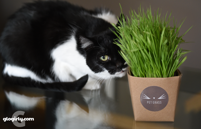 Katie with Whisker Greens Cat Grass