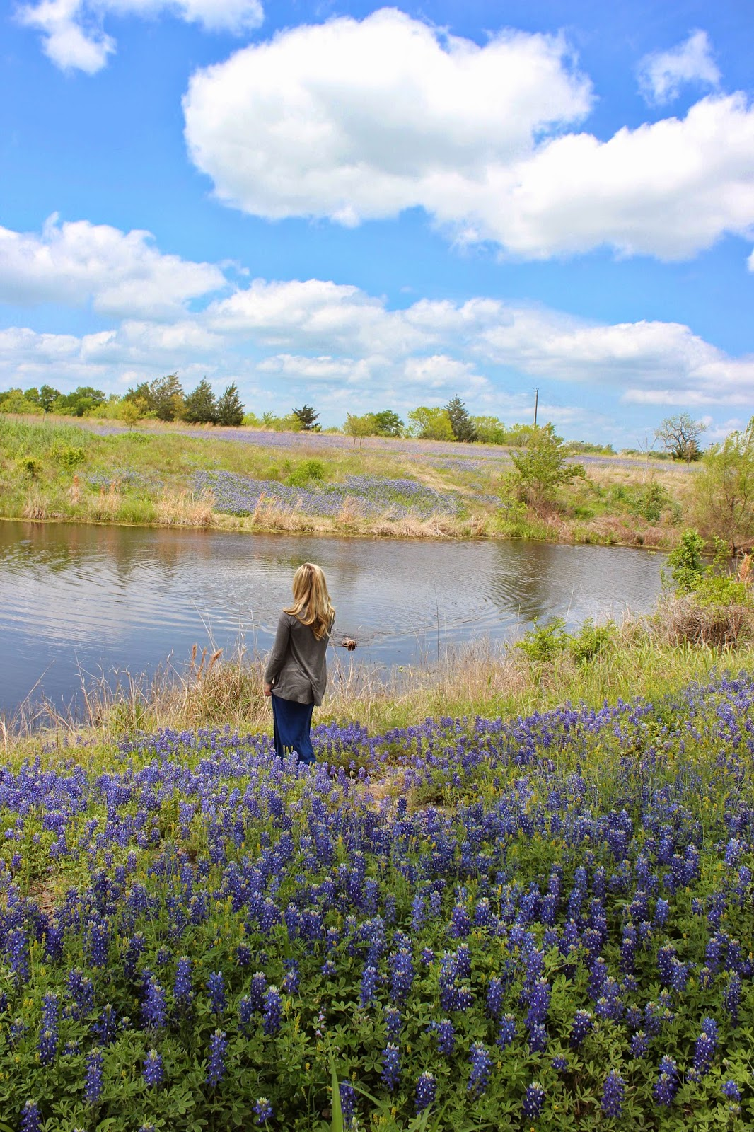 a city born love texas hill country bluebonnet season