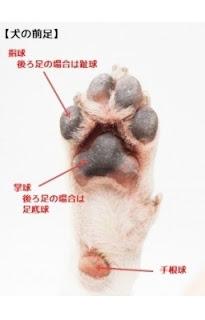 patas dos cães