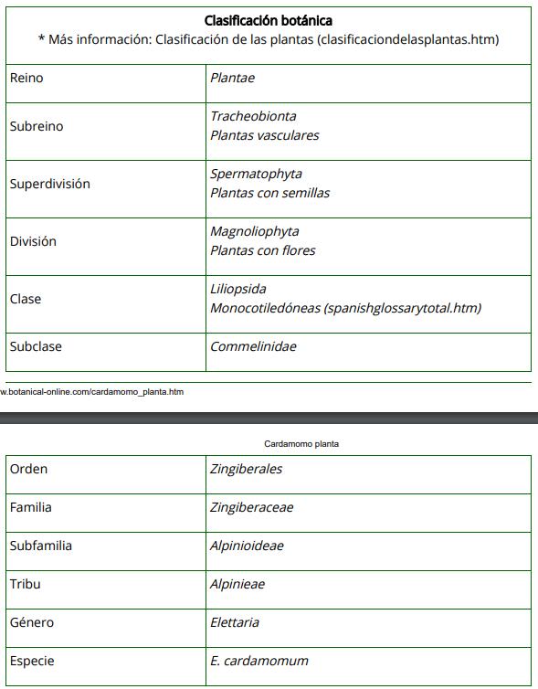 Clasificación Botánica del Cardomomo