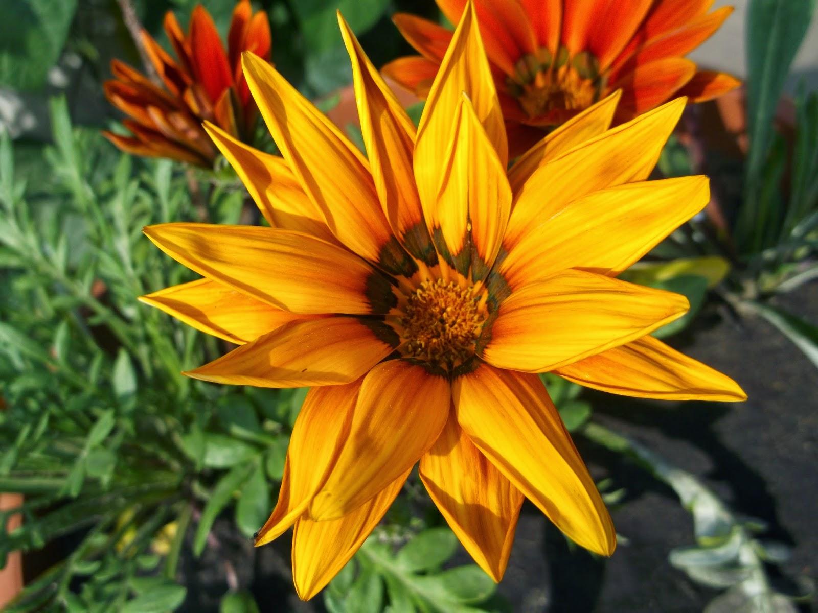 Цветы картинки и названия цветов садовых