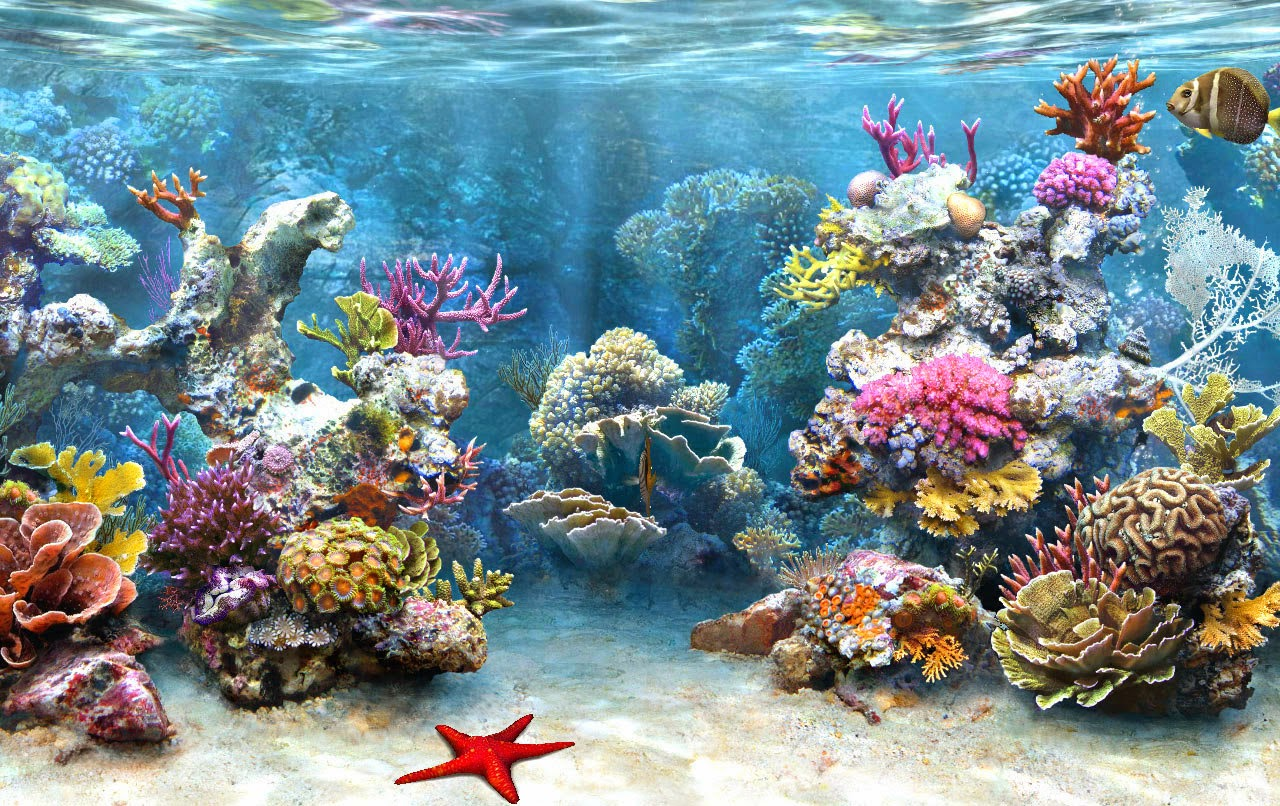 Desktop HD Wallpapers Free Downloads: Coral Reef HD Wallpapers