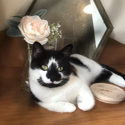 black and white cat sitting on table next to mirror and vase of flowers