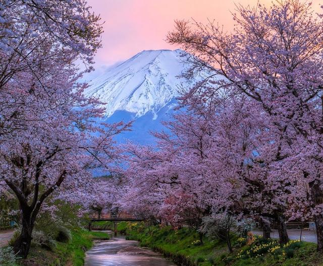 Chùm ảnh đẹp Hoa Anh Đào Nhật Bản vào tháng 02/2020 6