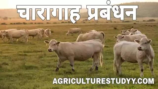 चारागाह प्रबंधन, चारागाह किसे कहते है अर्थ एवं परिभाषा लिखिए, pasture management in hindi, pasture in hindi, चारागाह कितने प्रकार के होते है, पशुपालन व्यवसाय में चारागाह क्या महत्व है