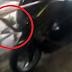 Video Ular King Kobra Bersembunyi Dalam Motor NMax
