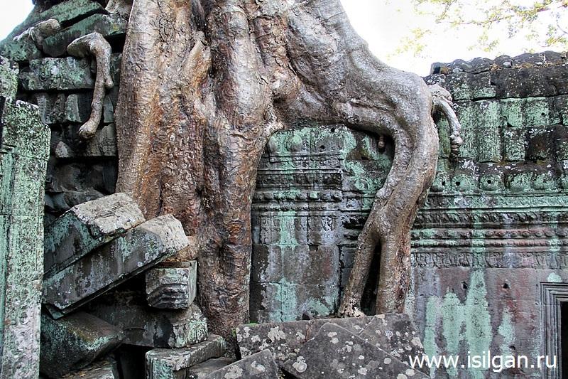 Храм Ta Prohm (Та Пром) или храм Анджелины Джоли. Камбоджа