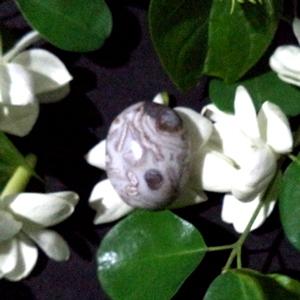 Mustika Susu Putih Besarkan Payudara