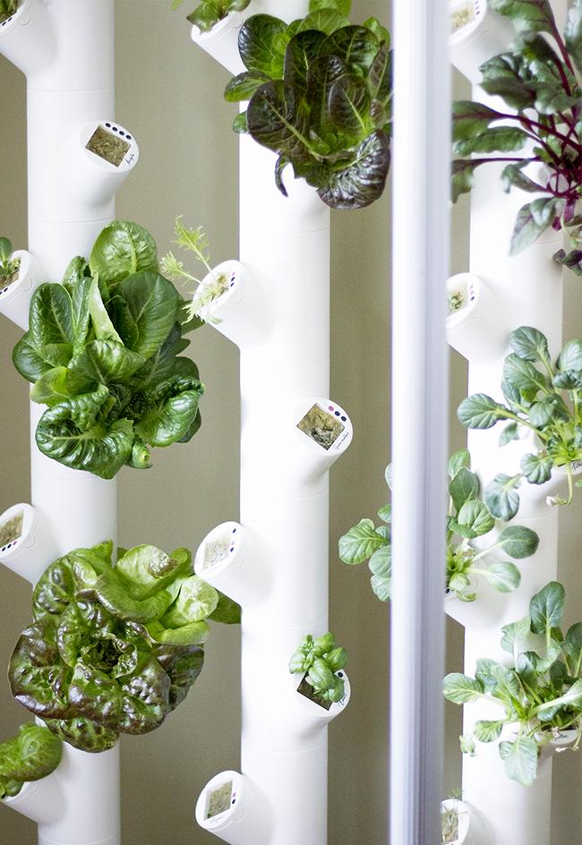 Indoor Garden System
