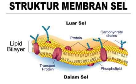 Gambar, Struktur Organel Sel Hewan dan Fungsinya