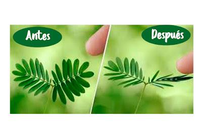 colección mimosa muselina gasa bambula mimuselina blog ternura protección sensiblidad bebé