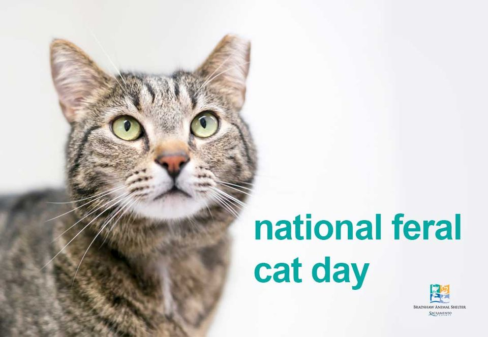 National Feral Cat Day Wishes Images