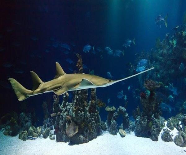 https://www.bioorbis.org/2015/07/voces-conhecem-o-peixe-serra.html