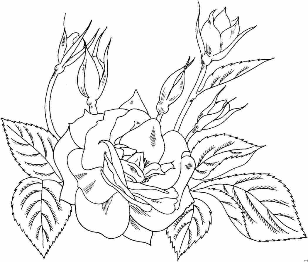 Flores Hermosas Como Dibujar