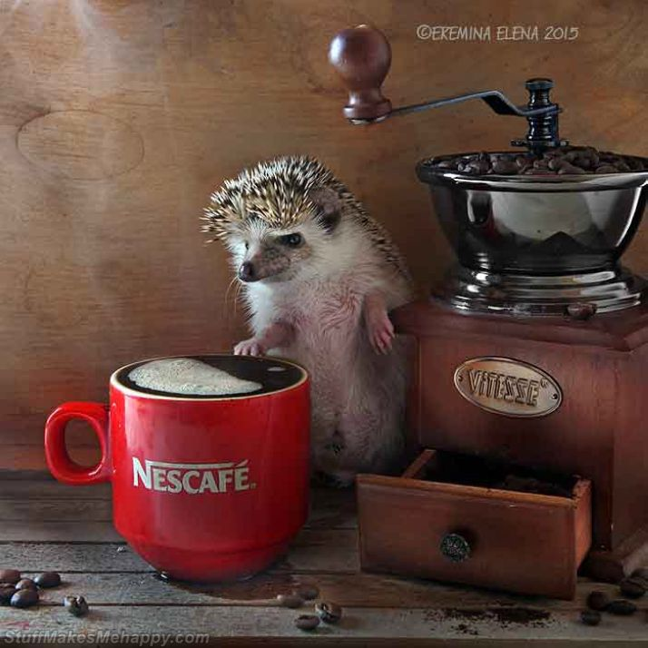 Cute Hedgehog Pictures, Hedgehog Images, Pictures of Hedgehogs