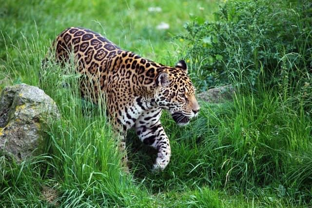 Kumbhalgarh Wildlife Sanctuary Animals