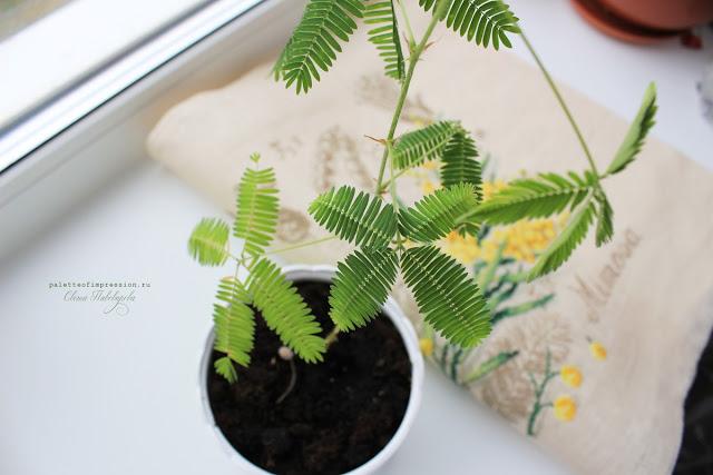 Ботанический этюд Вероник Анжанжэ Мимоза Вышивка крестом на льне Мимоза стыдливая