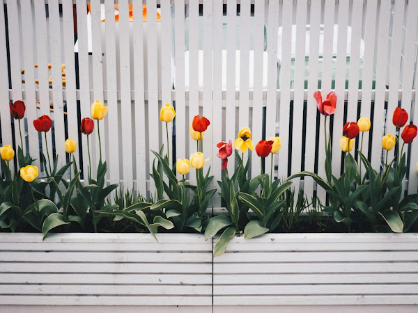 Tips To Maintain Outdoor Fencing In Your Garden