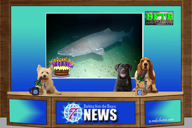 BFTB NETWoof News with Greenland Shark on backscreen