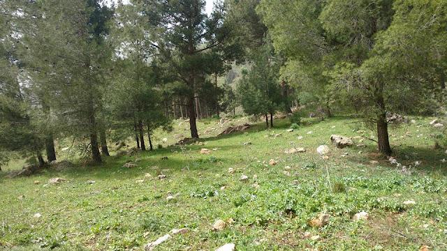 היער בצוק מנרה