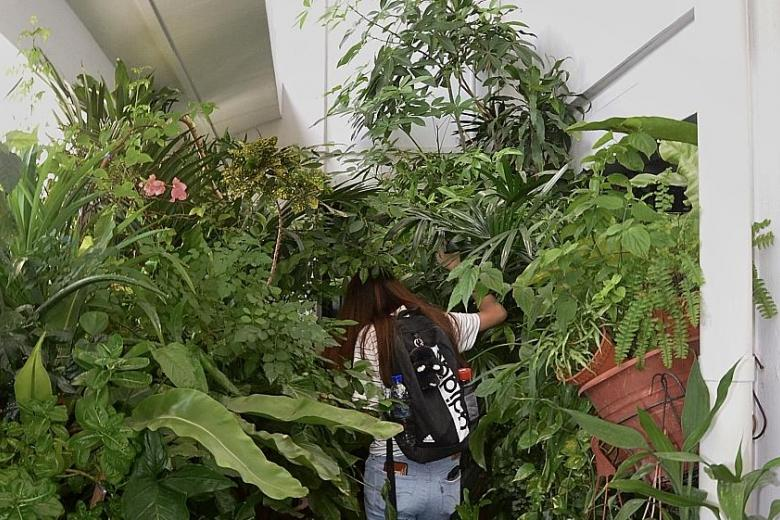 Neighbour say owner of Pasir Ris flat causing obstruction and fire hazard with her potted plants.