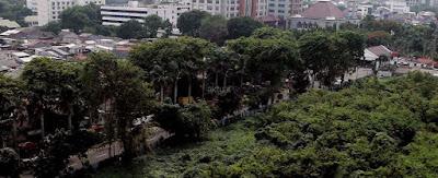 Mari Menanam Pohon Hijaukan Bumi Jakarta