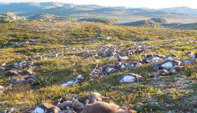 Kematian hewan massal baik itu terjadi pada manusia Kematian Massal Hewan Dari Ratusan Hingga Ribuan Pertanda Apakah?