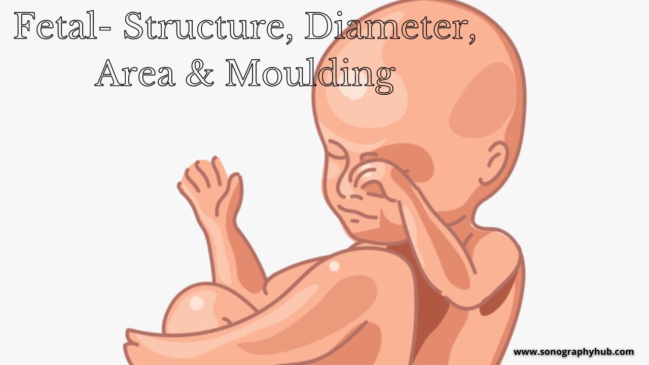 Fetal- area, structure, diameter & moulding