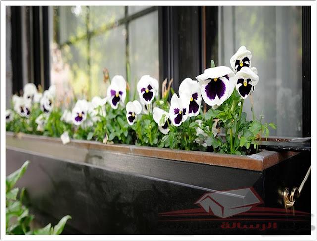 كآبة الحديقة الشتوية؟ ثلاث زهور ملونة سترتفع فوق الطقس البارد