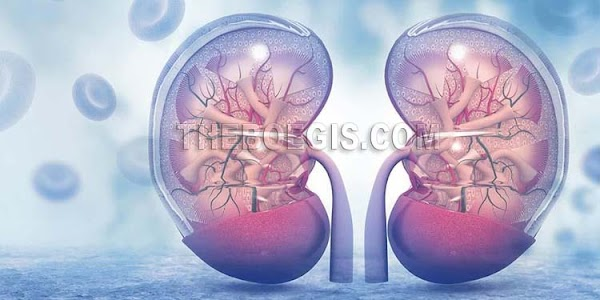 7 Tips on how to keep your kidneys healthy