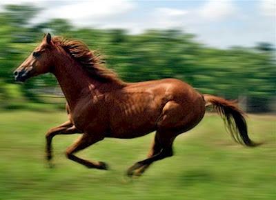 fotos de Caballo: Caballo corriendo